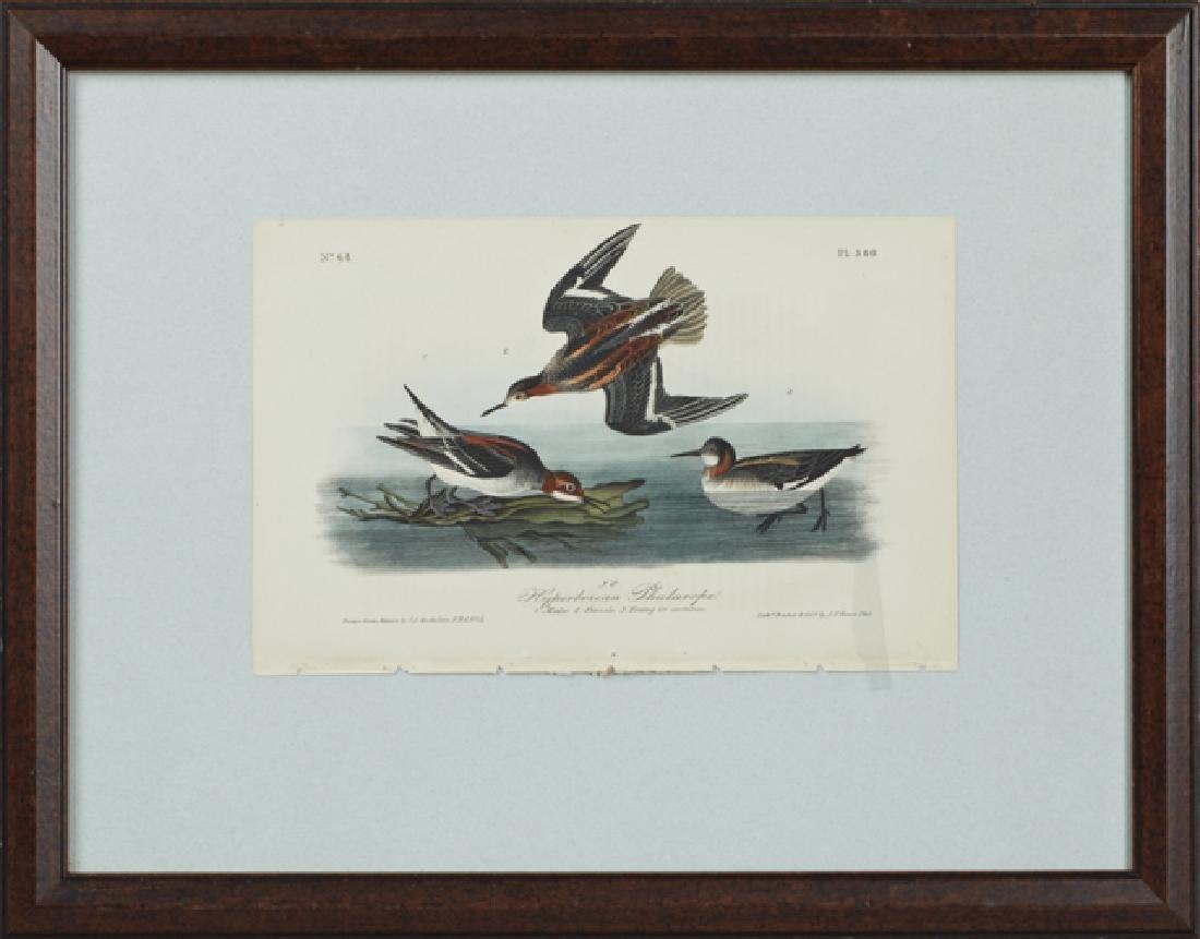 "John James Audubon (1785-1851), ""Hyperborean"
