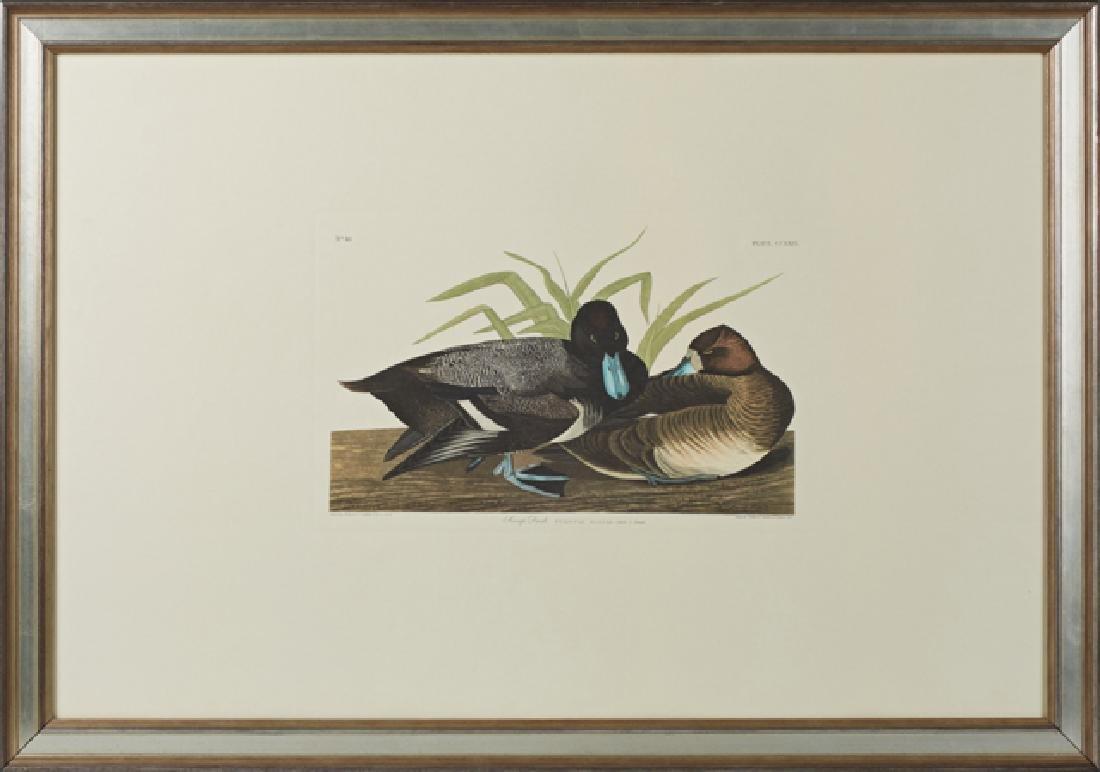 "John James Audubon (1785-1851), ""Scaup Duck,"" No. 46,"