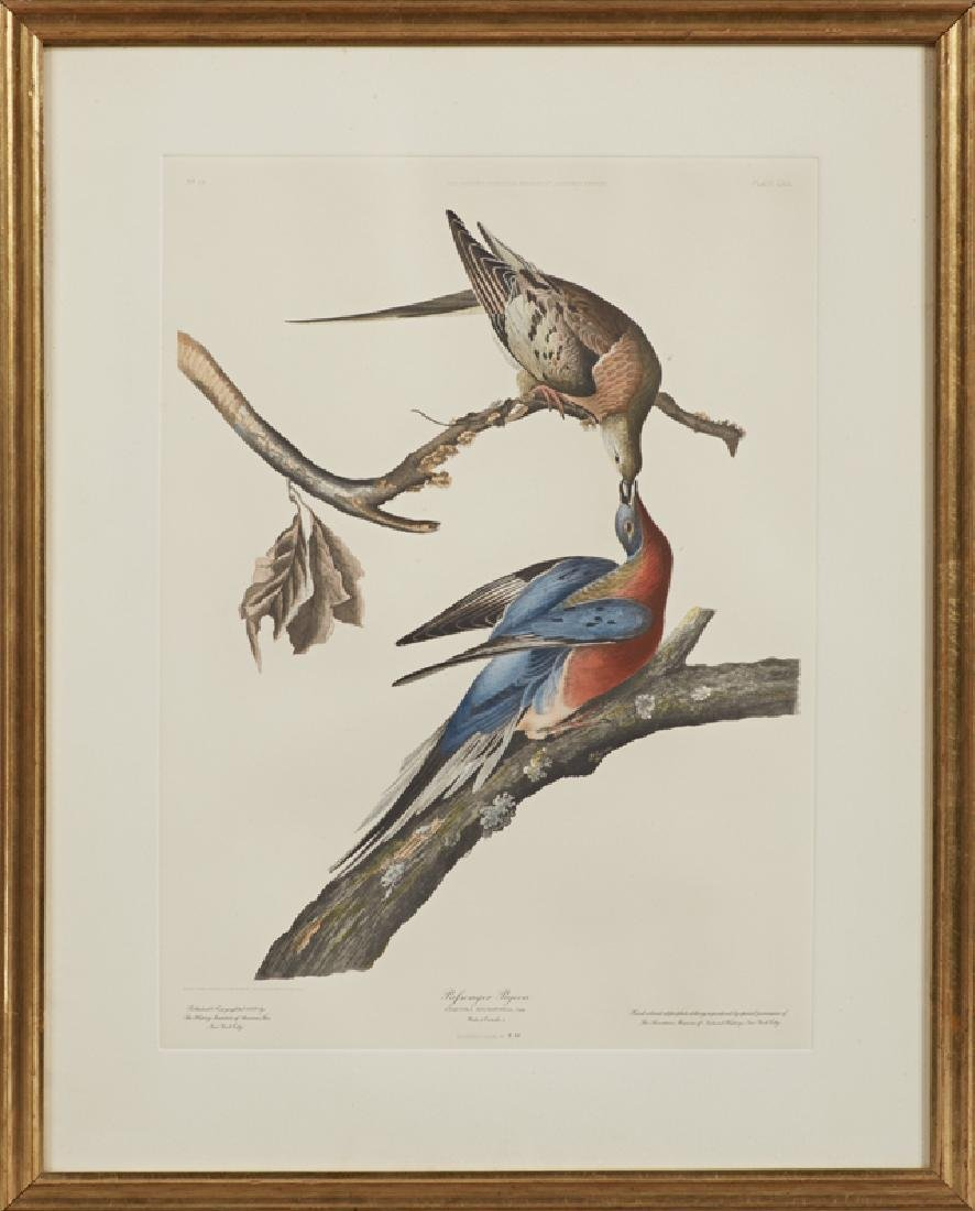 "John James Audubon (1785-1851), ""Passenger Pigeon,"" No."