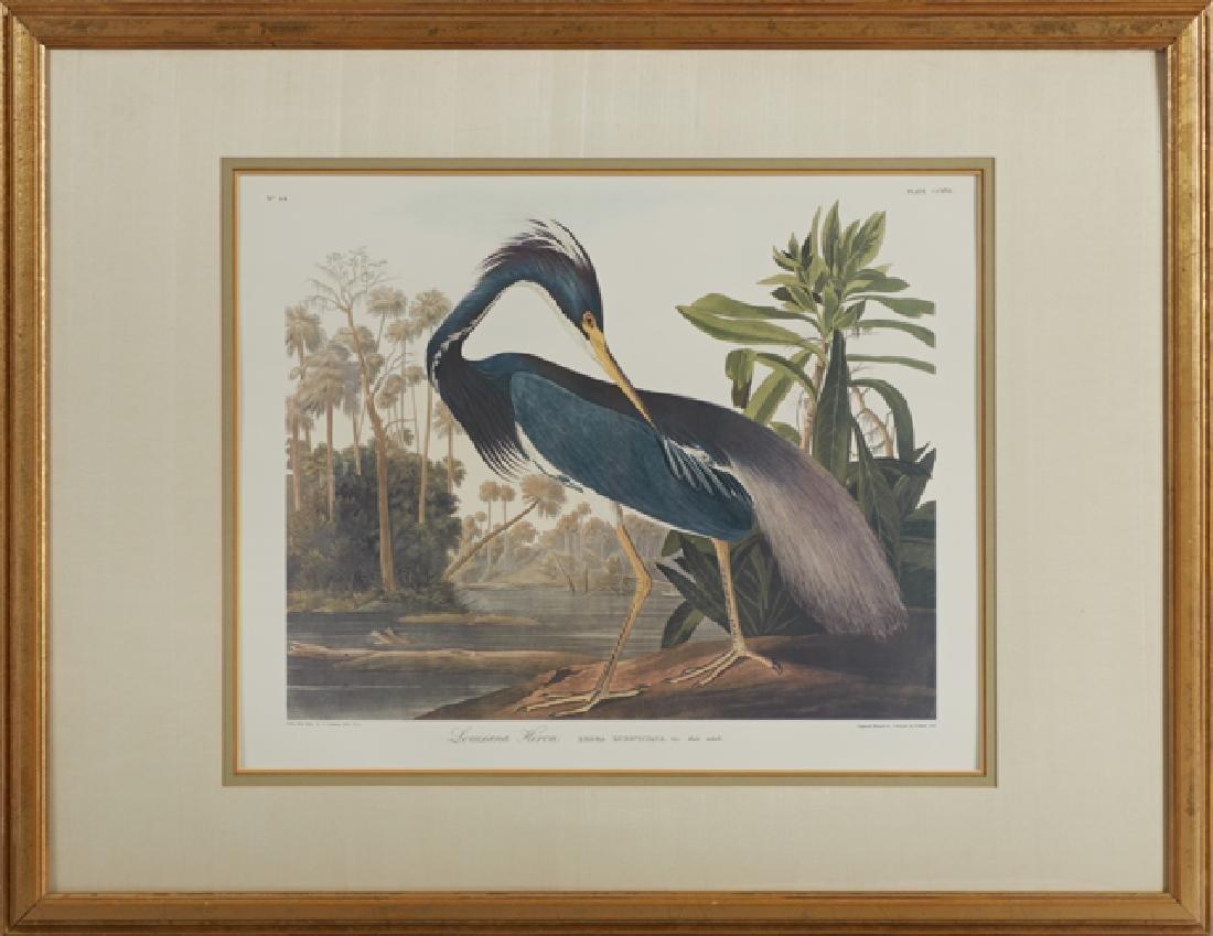 "John James Audubon (1785-1851), ""Louisiana Heron,"" No."
