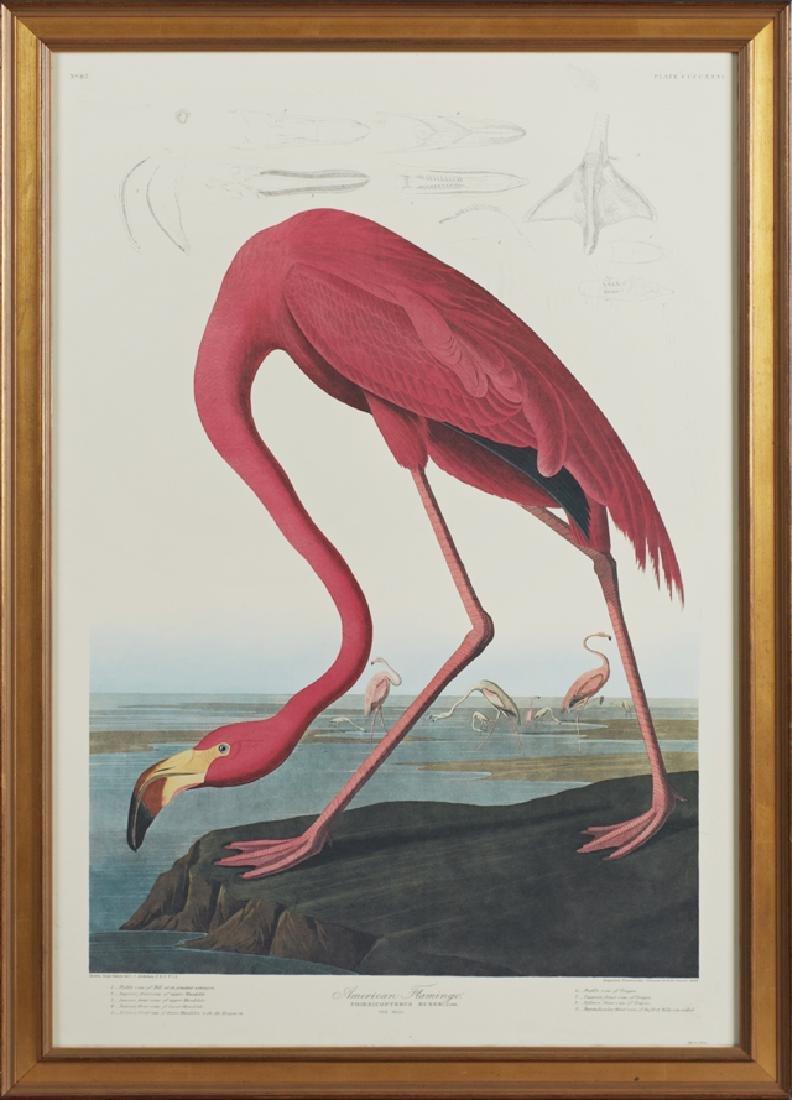 "John James Audubon (1785-1851), ""American Flamingo,"""