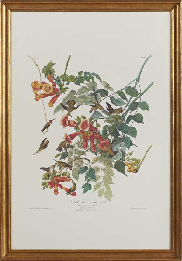 "John James Audubon (1785-1851), ""Ruby-throated"