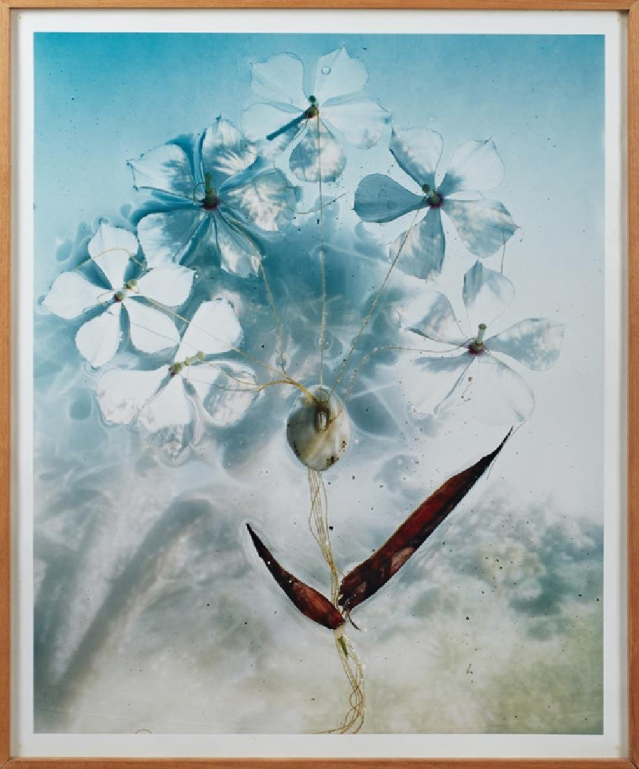 Large Abstract Photograph of a Flower, Dorinth,