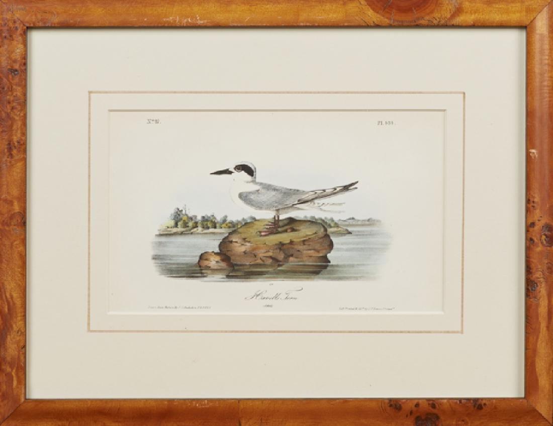 "John James Audubon (1785-1851), ""Havells Tern,"" No. 87,"