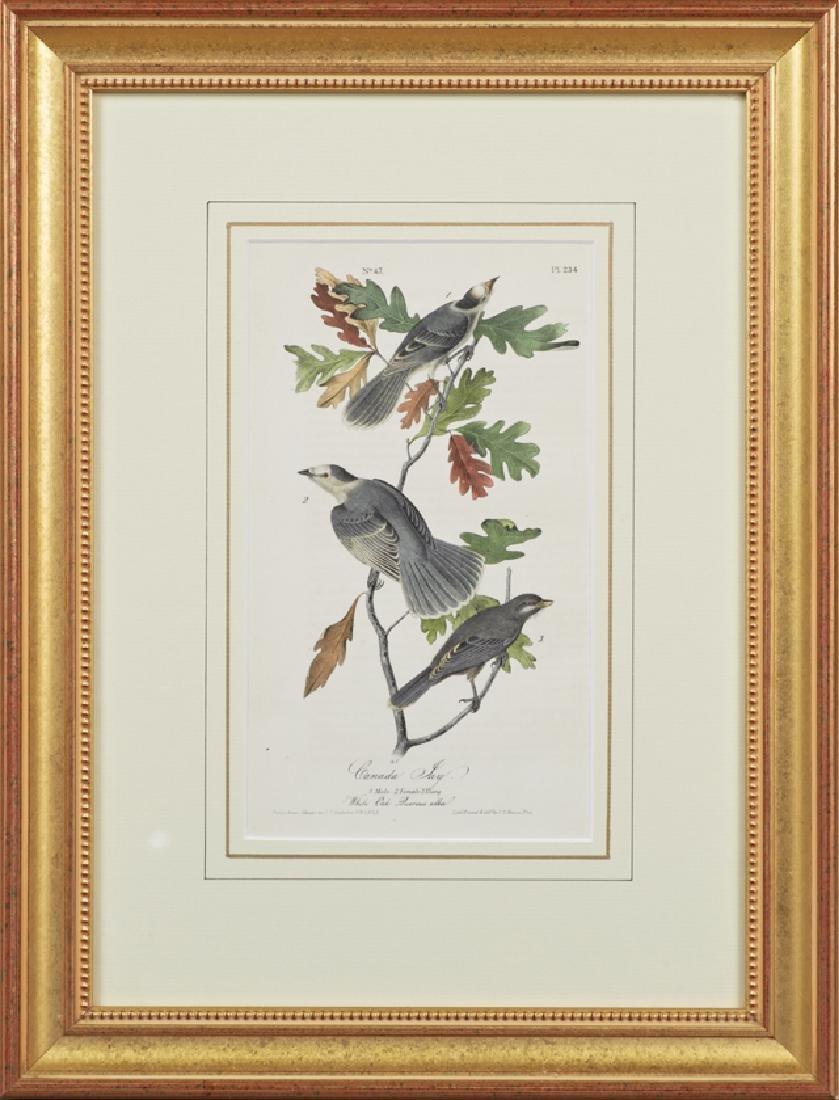 """John James Audubon (1785-1851), """"Canada Jay,"""" No. 47,"""