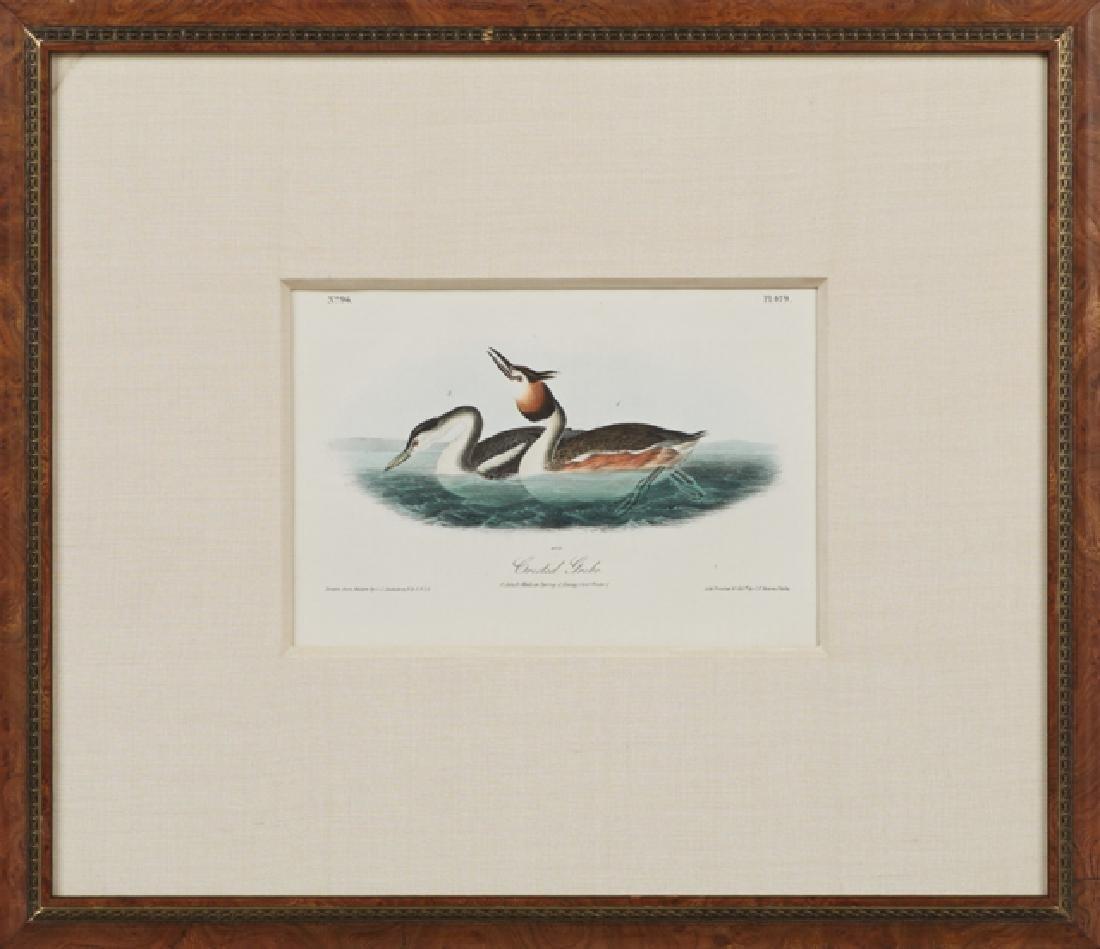 "John James Audubon (1785-1851), ""Crested Grebe,"" 1842,"