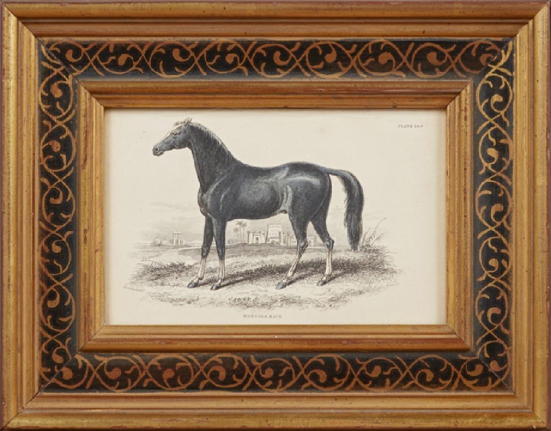 """Charles Hamilton Smith (1776-1859), """"Dongola Race,"""""""