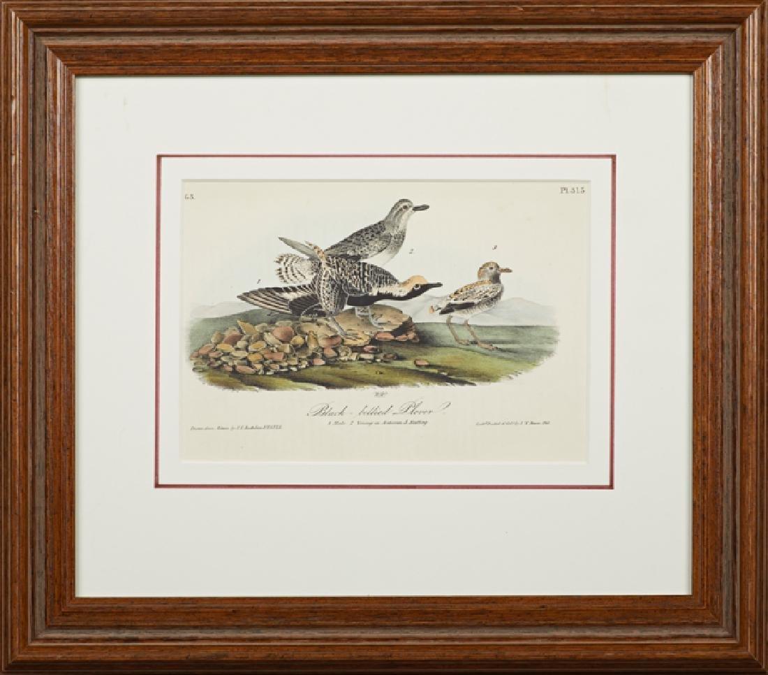 """John James Audubon (1785-1815), """"Black-bellied Plover,"""""""