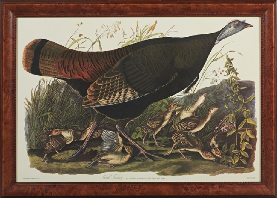 """John James Audubon (1785-1851), """"Wild Turkey,"""" Plate 6,"""