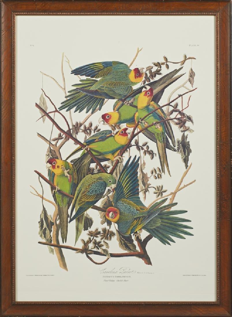 """John James Audubon (1785-1851), """"Carolina Parrot,"""" No."""