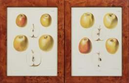 After J Berghuis Yellow Apples 20th c pair of