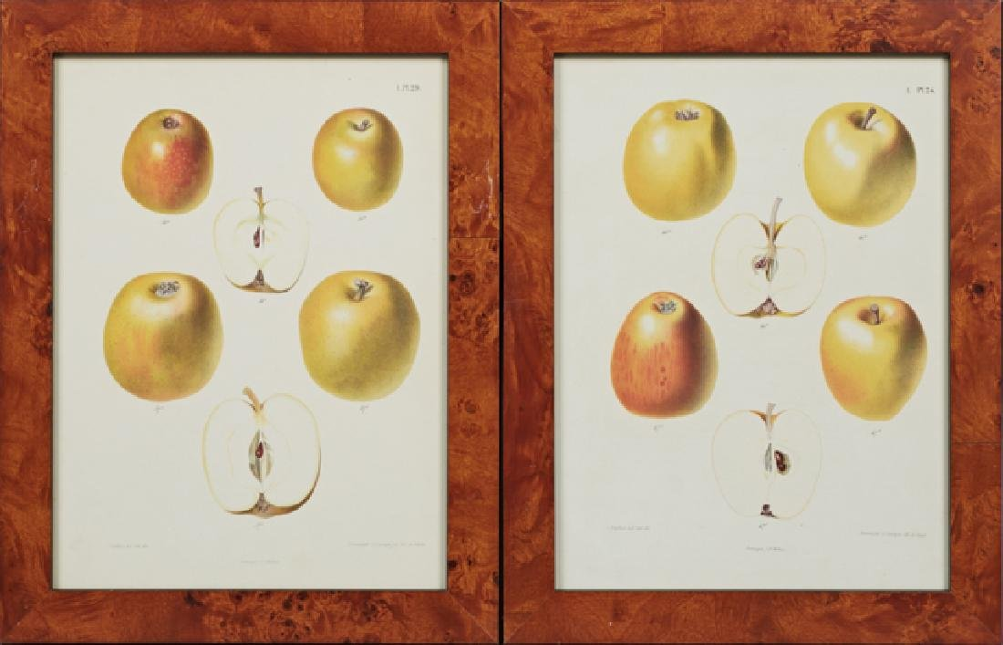 "After J. Berghuis, ""Yellow Apples,"" 20th c., pair of"