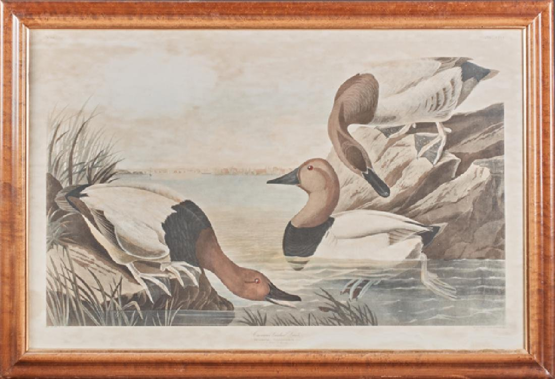 "John James Audubon (1785-1851), ""Canvas-backed Duck,"""