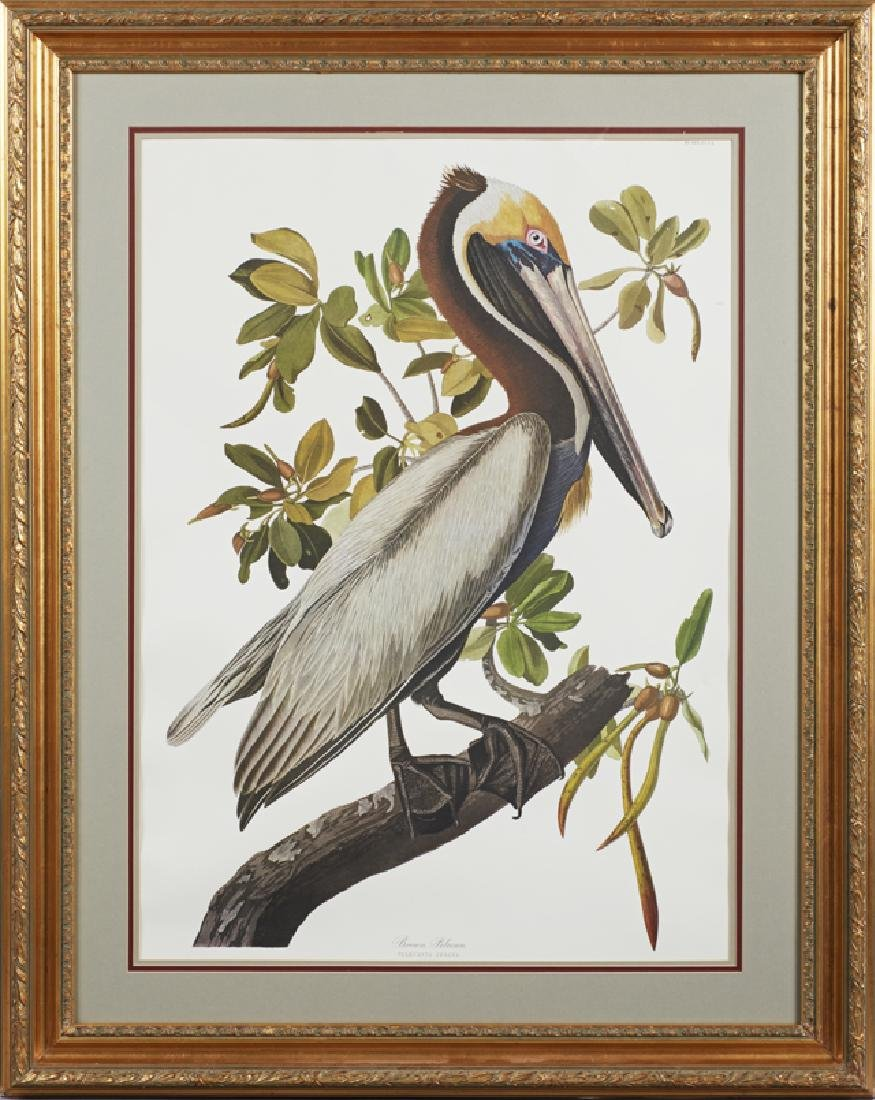 "John James Audubon (1785-1851), ""Brown Pelican,"" Plate"