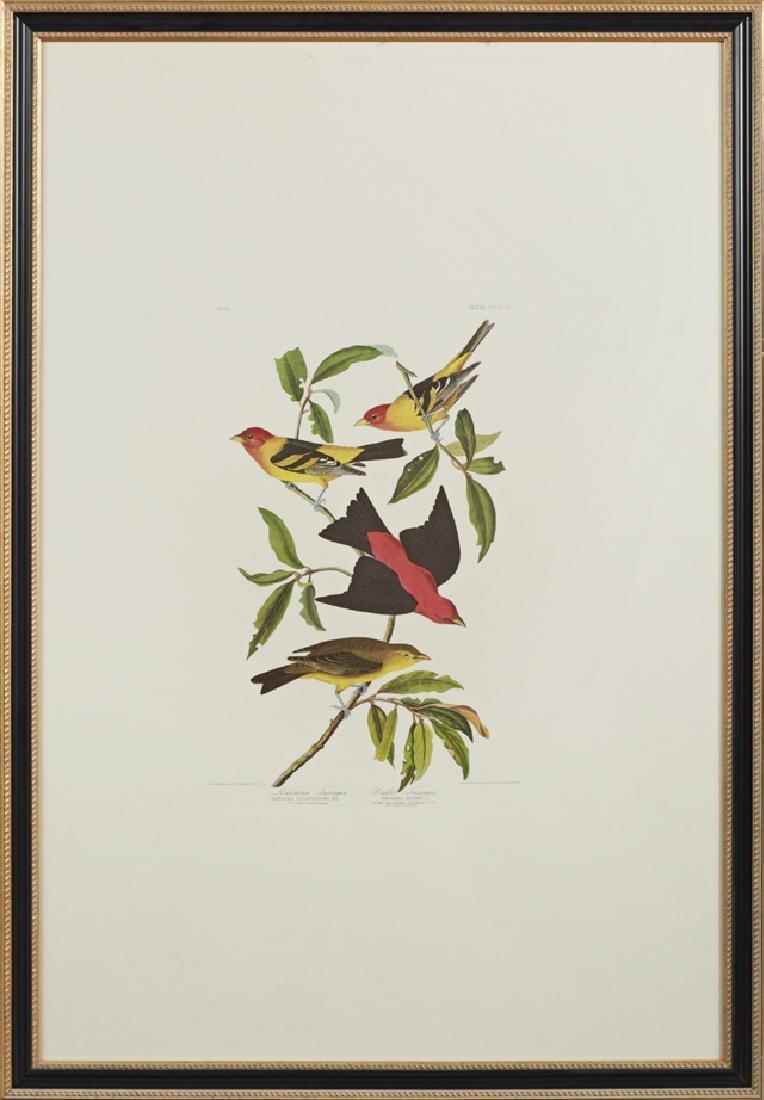 """John James Audubon (1785-1851), """"Louisiana Tanager and"""