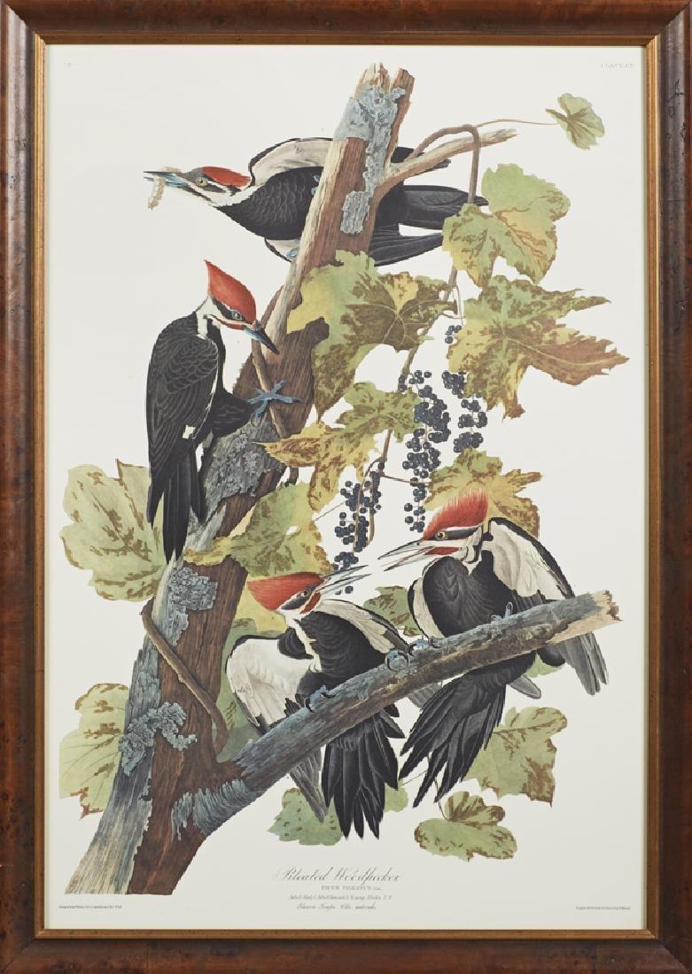 "John James Audubon (1785-1851), ""Pileated Woodpecker,"""