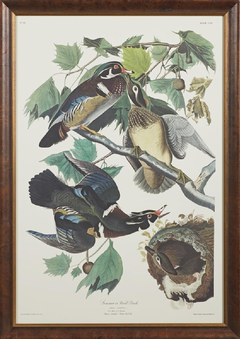 "John James Audubon (1785-1851), ""Summer or Wood Duck,"""