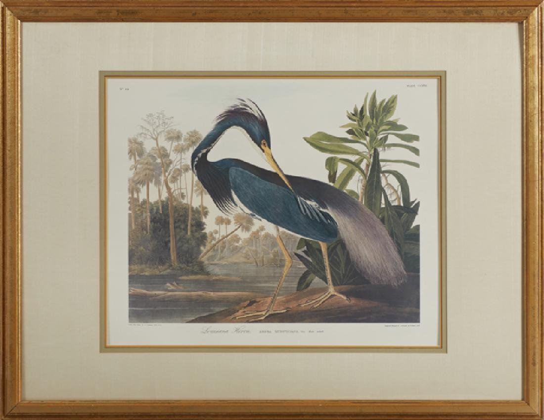 "John James Audubon (1785-1851), ""Louisiana Heron,"" No."