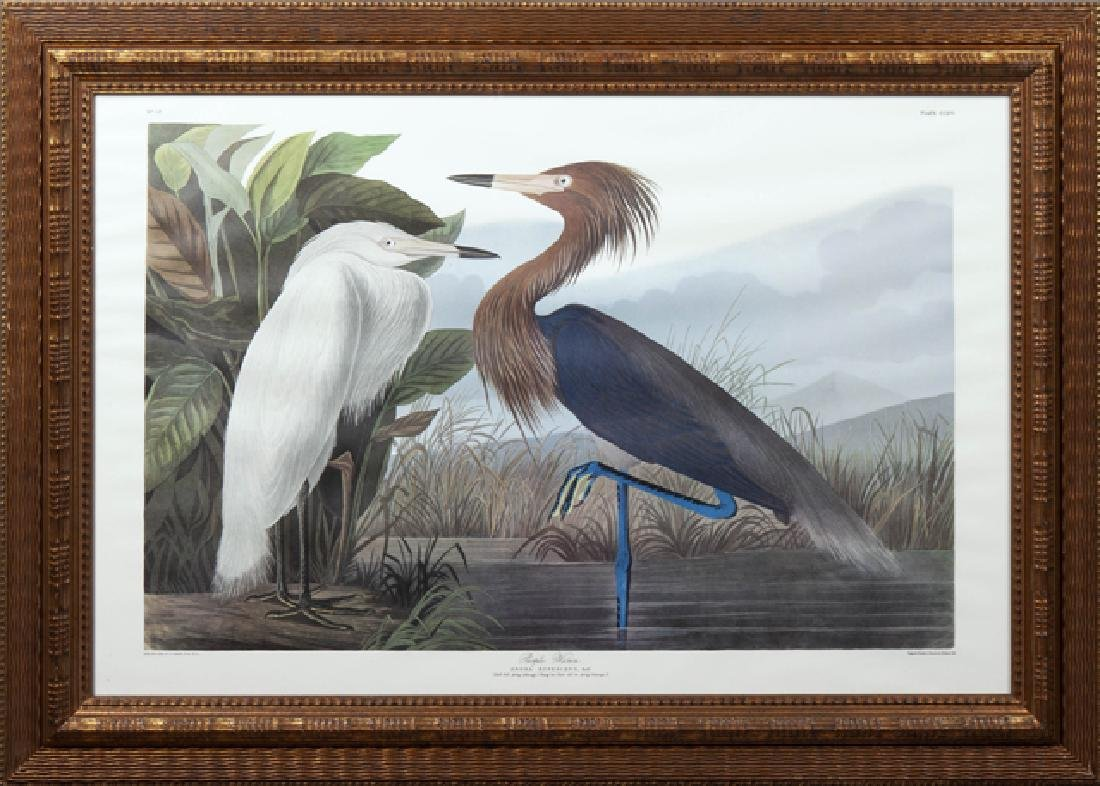 "John James Audubon (1785-1851), ""Purple Heron,"" No. 52,"