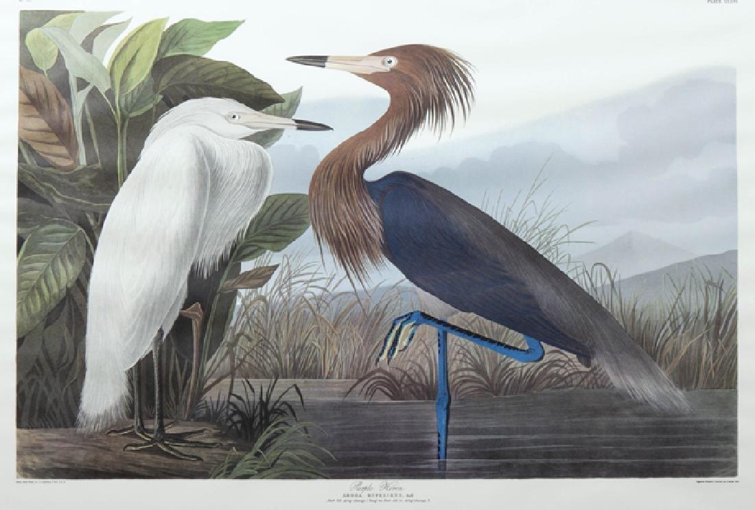 "John James Audubon (1785-1851), ""Purple Heron,"" No. 52, - 2"