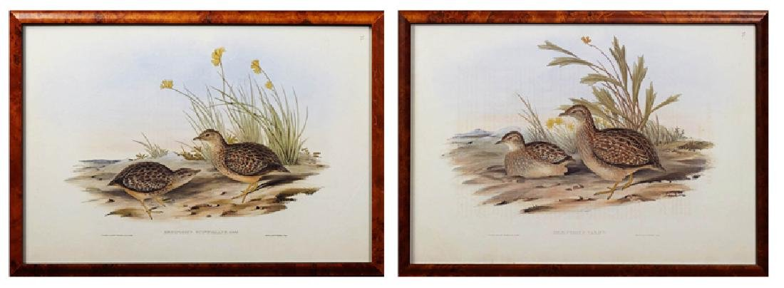 """J. Gould and H. C. Richter, """"Hemipodius Varies"""" and"""
