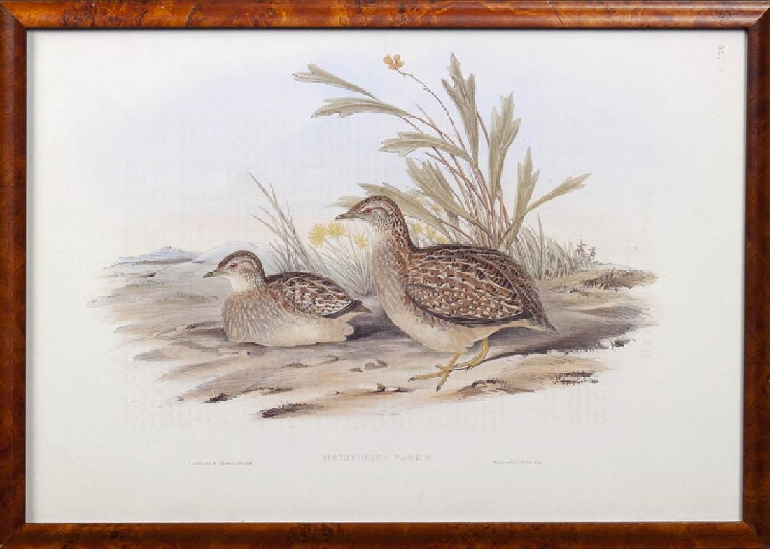 """J. Gould and H. C. Richter, """"Hemipodius Varies"""" and - 2"""