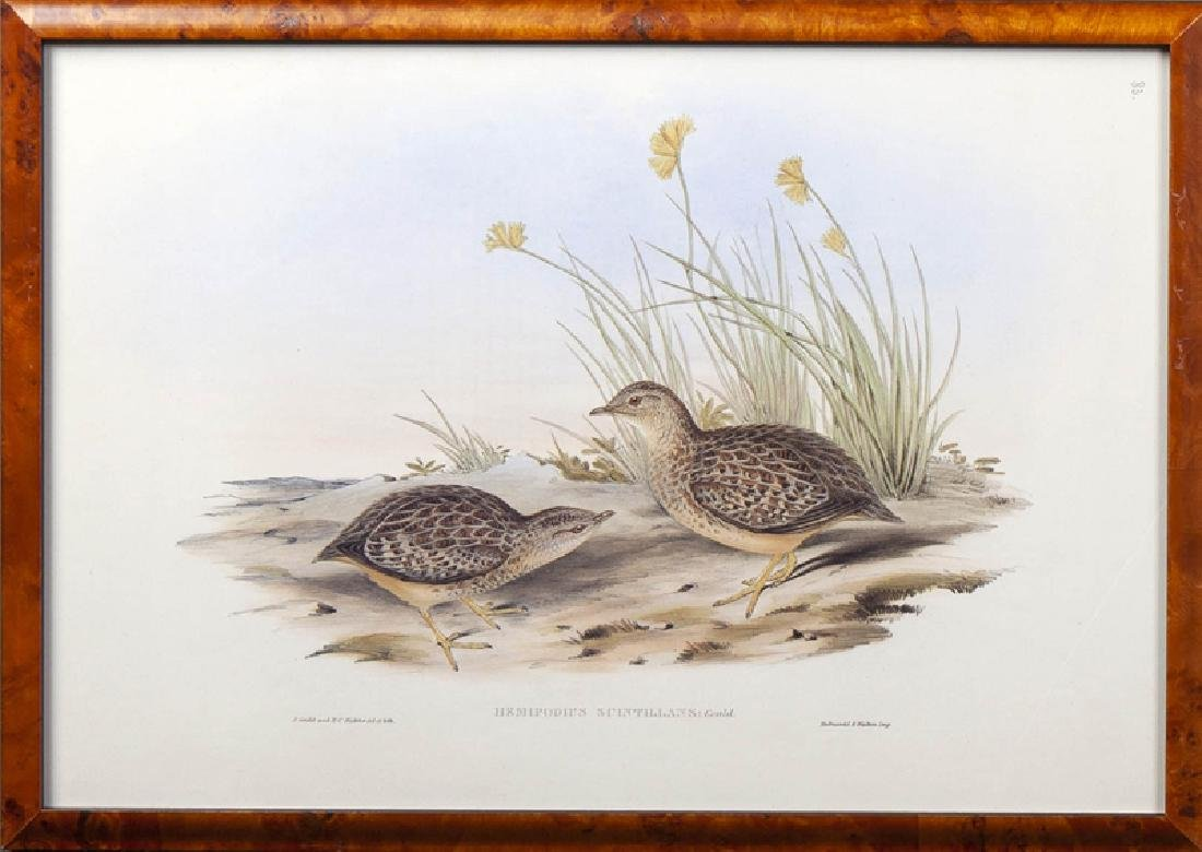 """J. Gould and H. C. Richter, """"Hemipodius Varies"""" and - 4"""