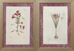 Elizabeth Blackwell 17101774 British Saffron
