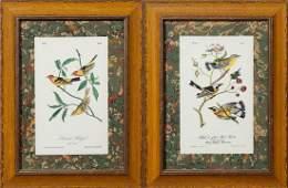 """John James Audubon (1785-1851), """"Louisiana Tanager,"""""""