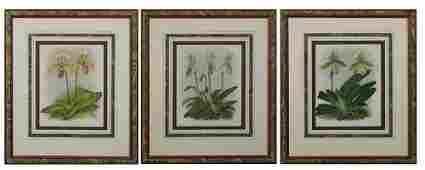 Group of Three Colored Botanical Prints early 20th c