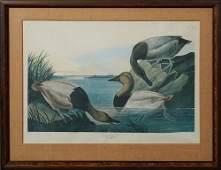 "John James Audubon (1785-1851), ""Canvas Backed Duck,"""