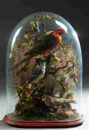 Large Victorian Oblong Blown Glass Taxidermied Bird