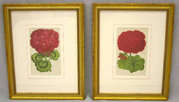 1: Pair of Botanical Prints of Geraniums, 19th c., fram