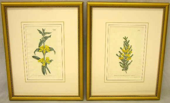 "1: T. Curtis, ""Pair of Botanicals of Yellow Flowers, 19"