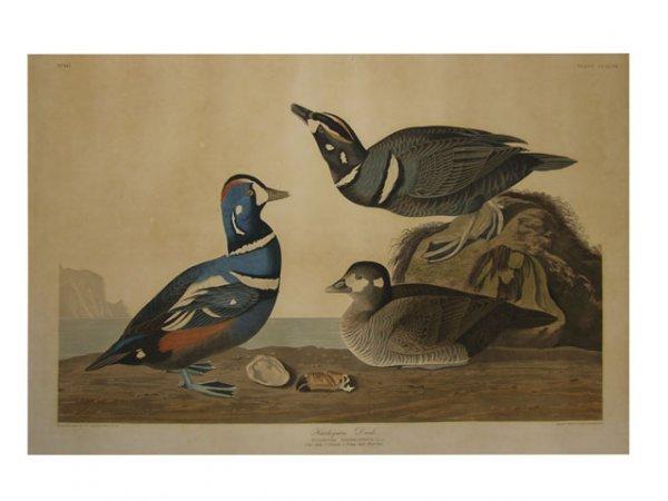 "90: John James Audubon (1785-1851), ""Harlequin Duck,"" 1"