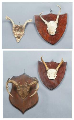 Four Small Antlers, 20th c., three mounted on wooden