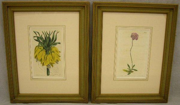 """2: T. Curtis, """"Pair of Botanical Prints,"""" 19th c., plat"""