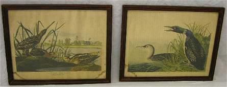 "1077: John James Audubon, ""American Snipe,"" and ""Great"