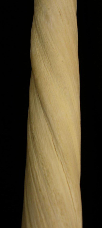 436:  Rare Narwhal Ivory Tusk, 19th c., now moun - 3