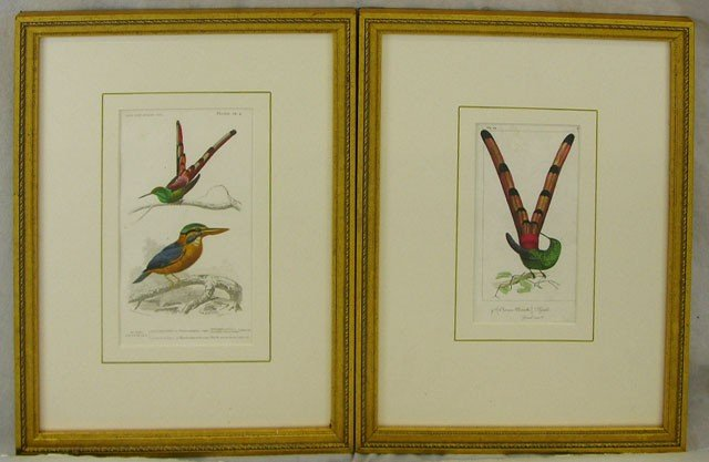 "1: ""Sappho,"" and ""Sappho and Martin,"" pair of hummingbi"