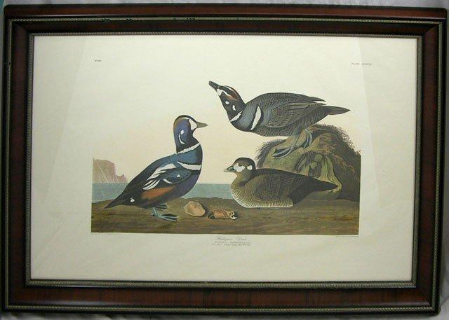 "814: John James Audubon (1785-1851), ""Harlequin Ducks,"""
