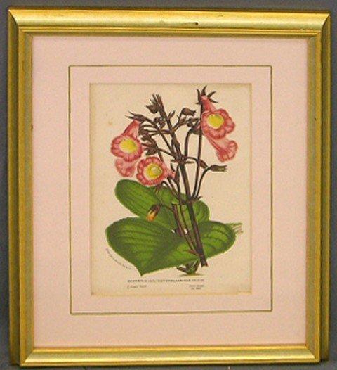 "6: ""Gesneria,"" 19th c., botanical print, presented in a"