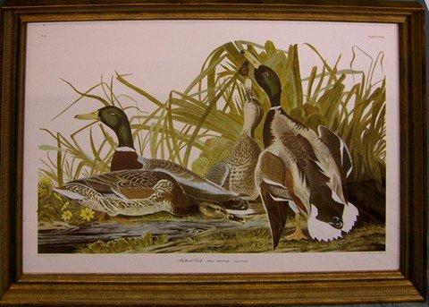 """908: John James Audubon (1785-1851), """"Mallard Duck,"""" pl"""