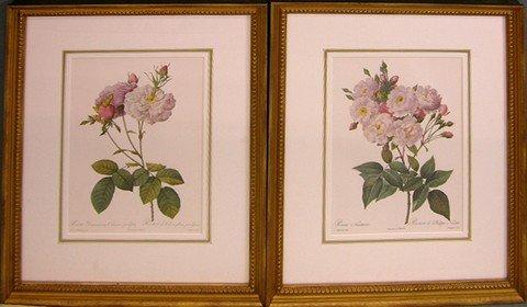 """917: Pierre J. Redoute (1759-1840), """"Rosa Noiessettiana"""