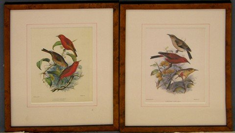 """976: F. W. Frohawk (1861-1946), """"Loxops Coccinea,"""" and"""