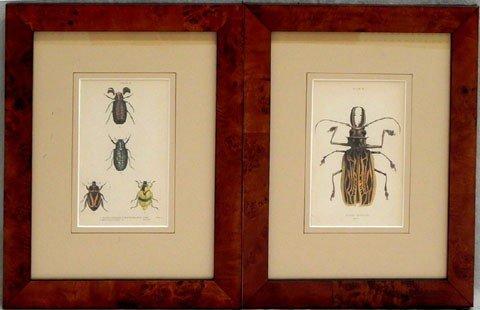 "2: William Home Lizars (1788-18590, "" Varieties of Beet"