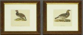 """Magnus Von Wright (1805-1868), """"Lyburus Tetrix,"""" An"""