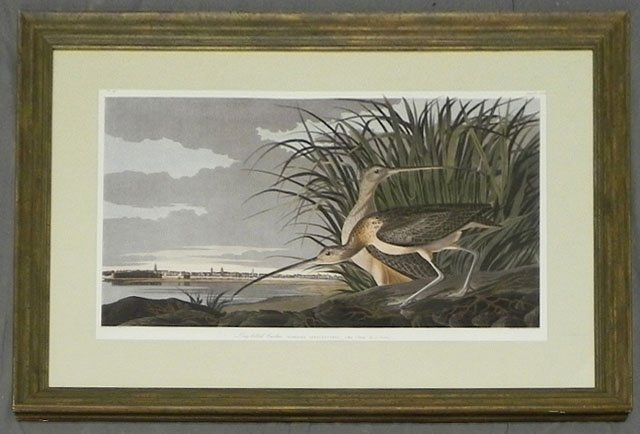 "906: John James Audubon (1785-1851), ""Long Billed Curle"