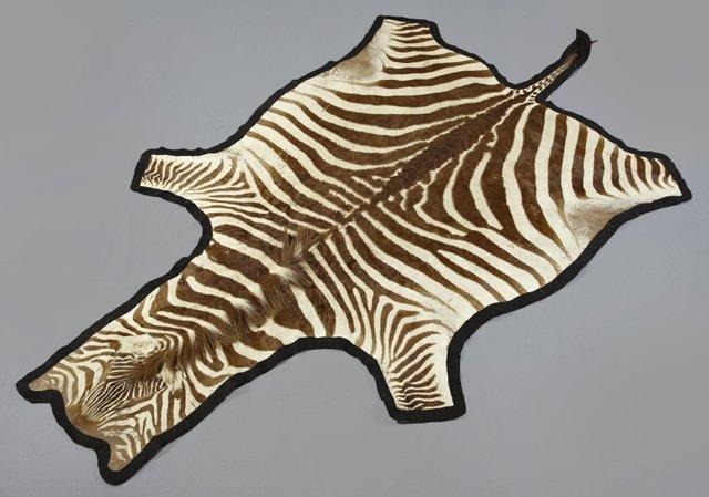Zebra Skin Rug, 5' x 9'.