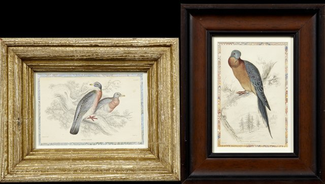 "William Home Lizars (1788-1859), ""Passenger Pigeon,"""